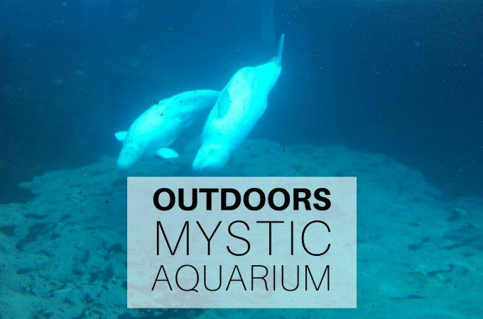 Outdoors: Mystic Aquarium, Connecticut