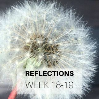 Reflections Week 18-19
