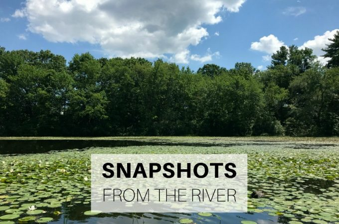 Snapshots from the river