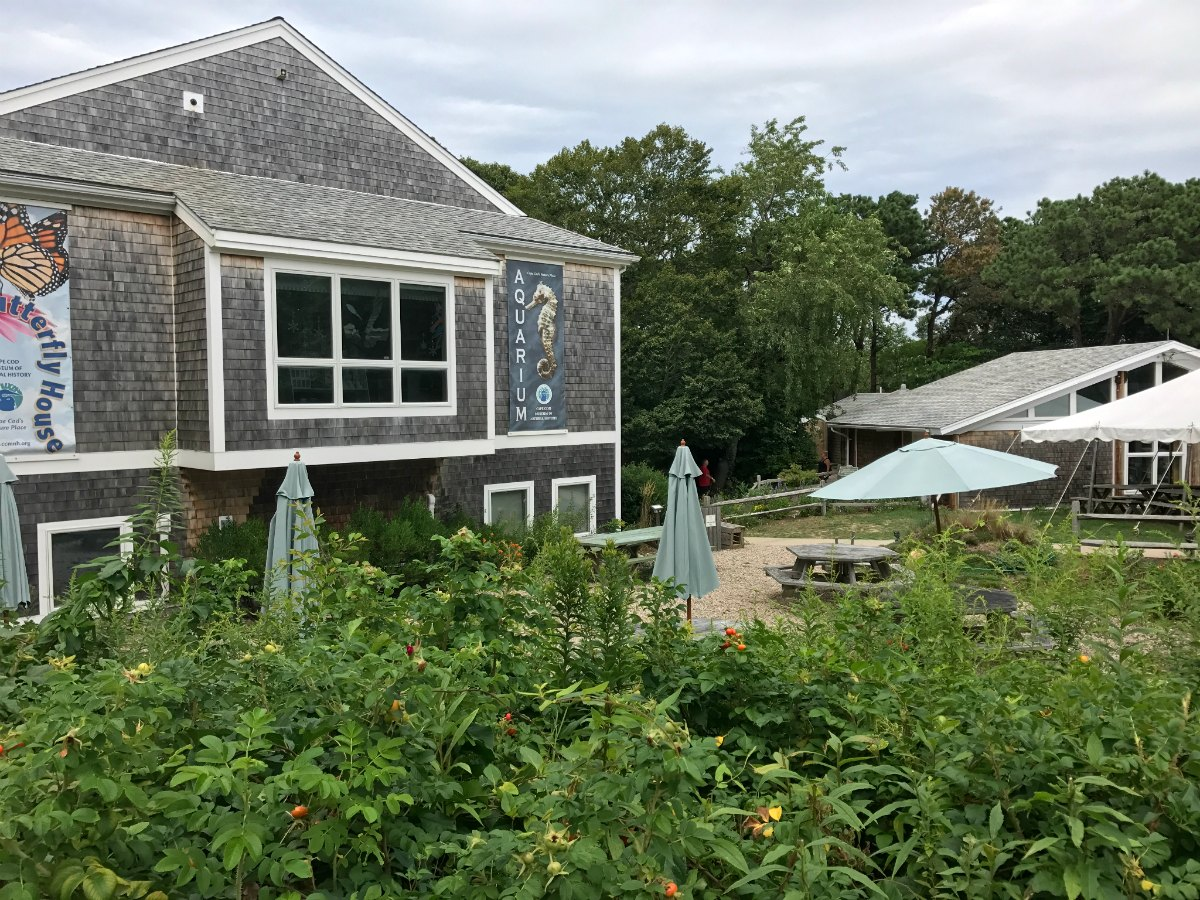 Snapshots from Cape Cod 15