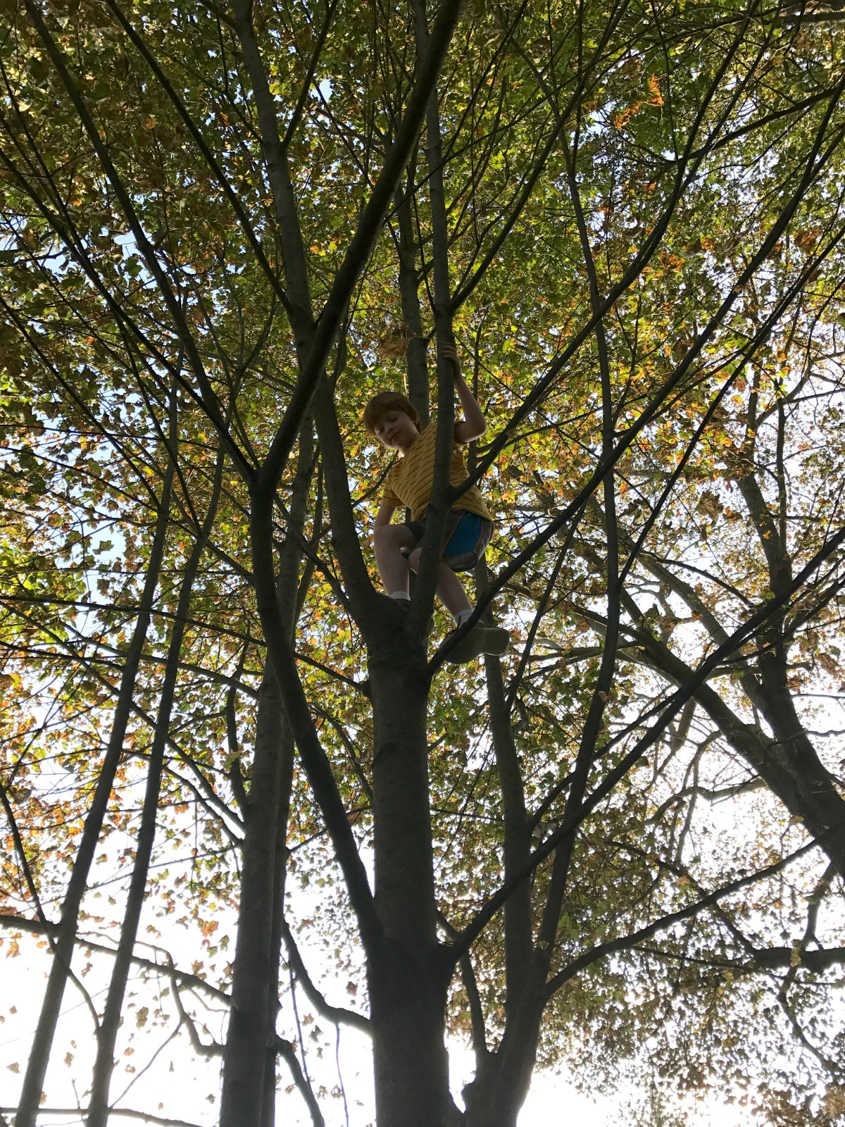 Snapshots from tree climbing adventures 1