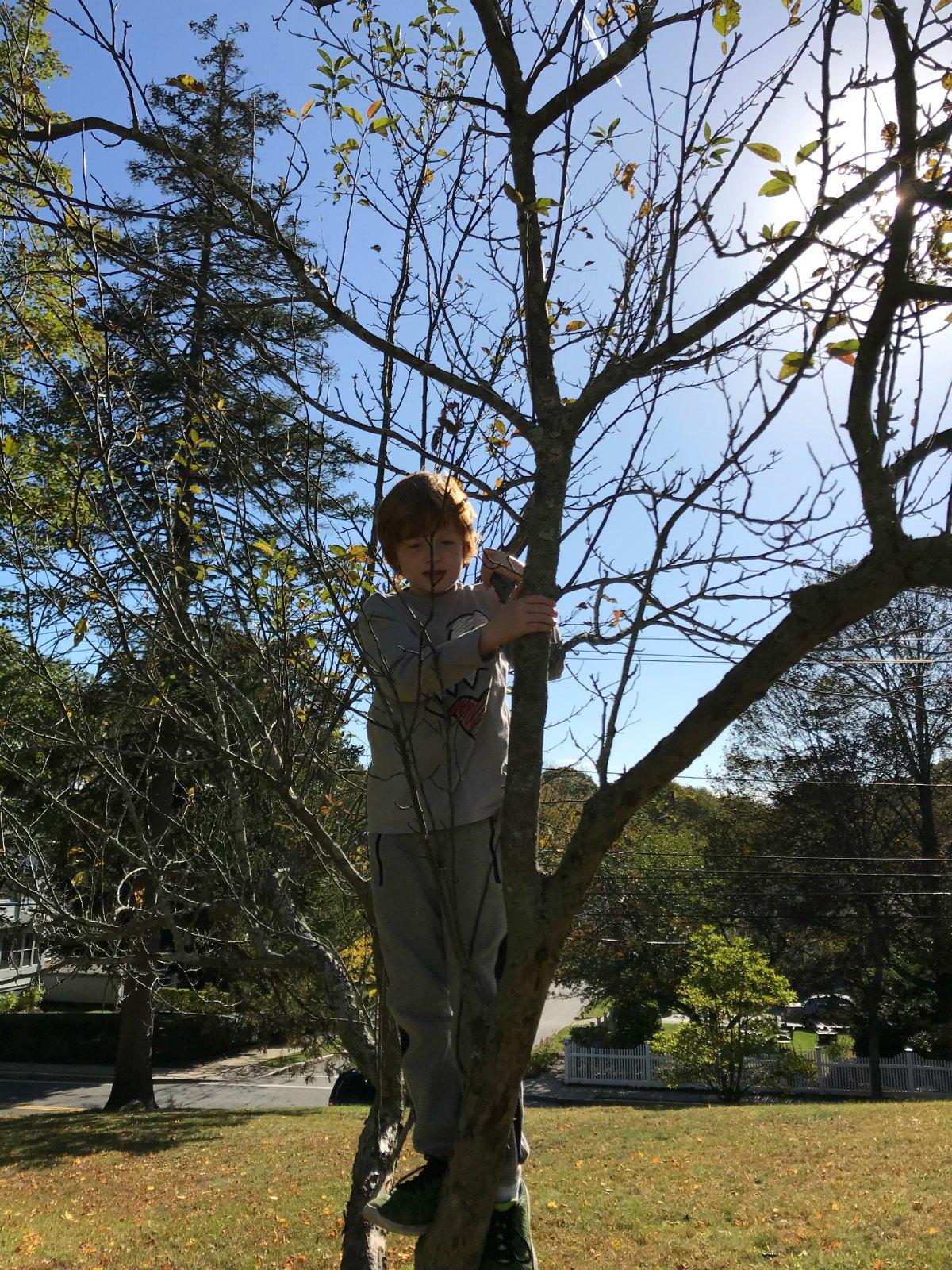 Snapshots from tree climbing adventures 3