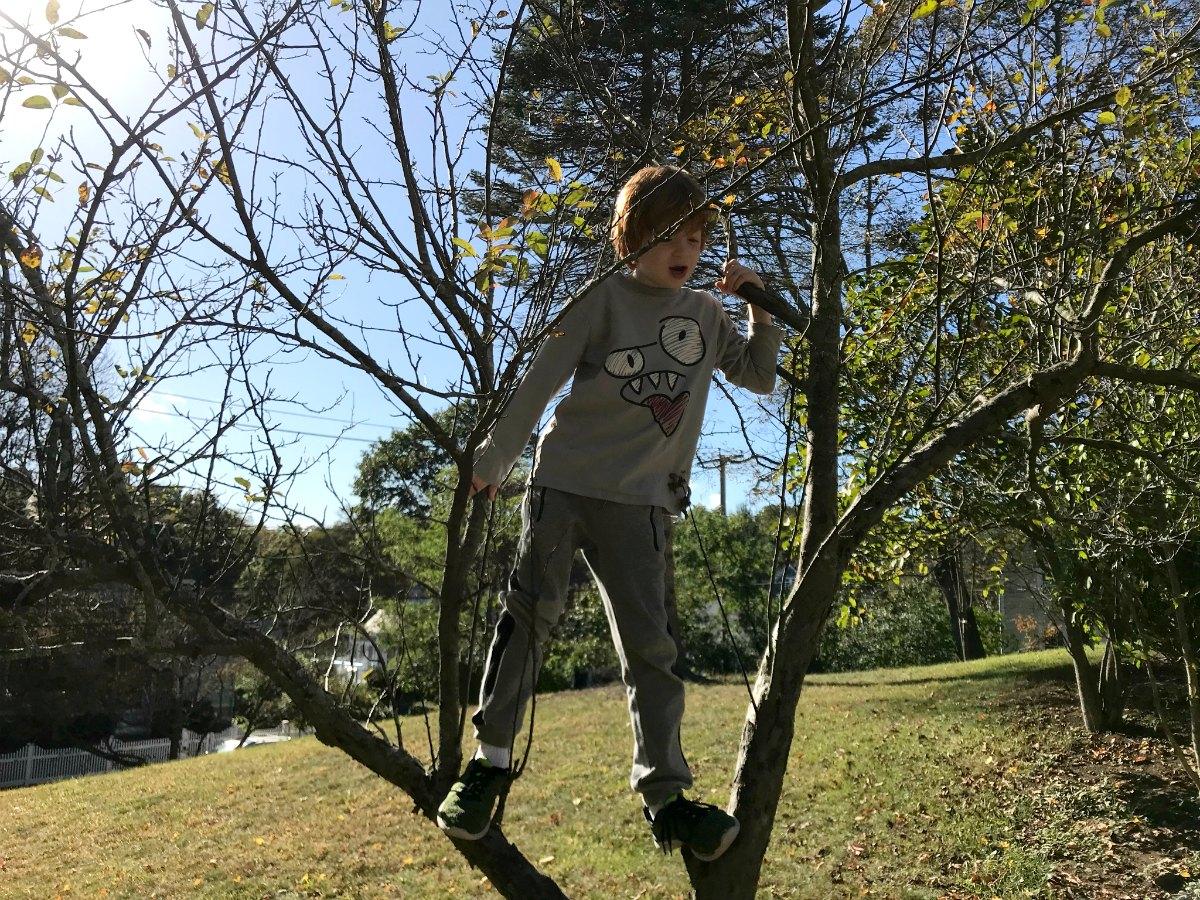 Snapshots from tree climbing adventures 4