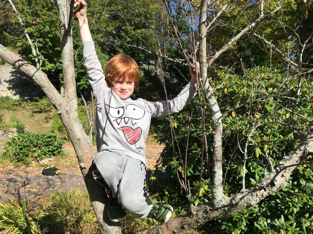 Snapshots from tree climbing adventures 7