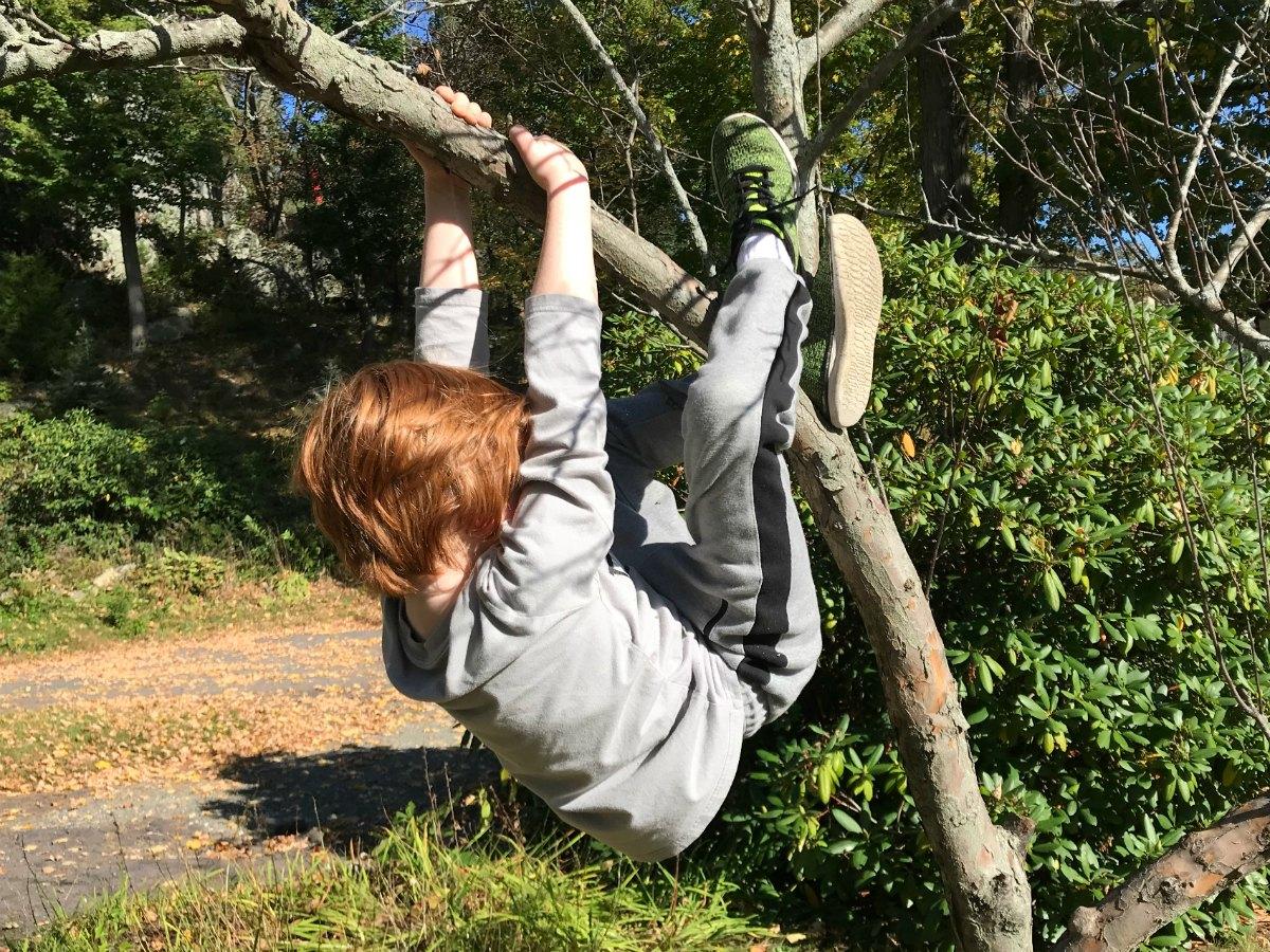 Snapshots from tree climbing adventures 9