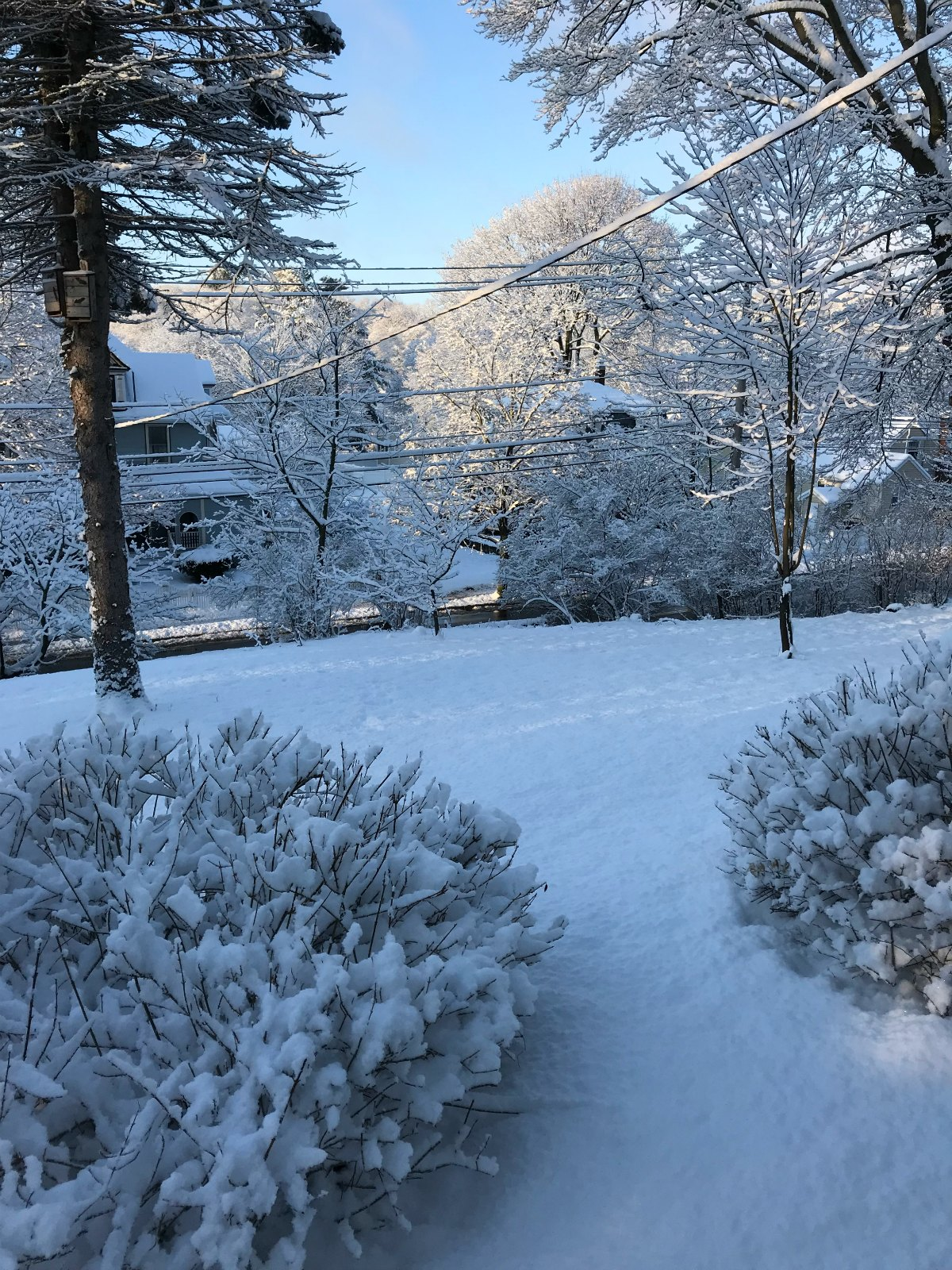 Snapshots of our winter Part 1 - 3