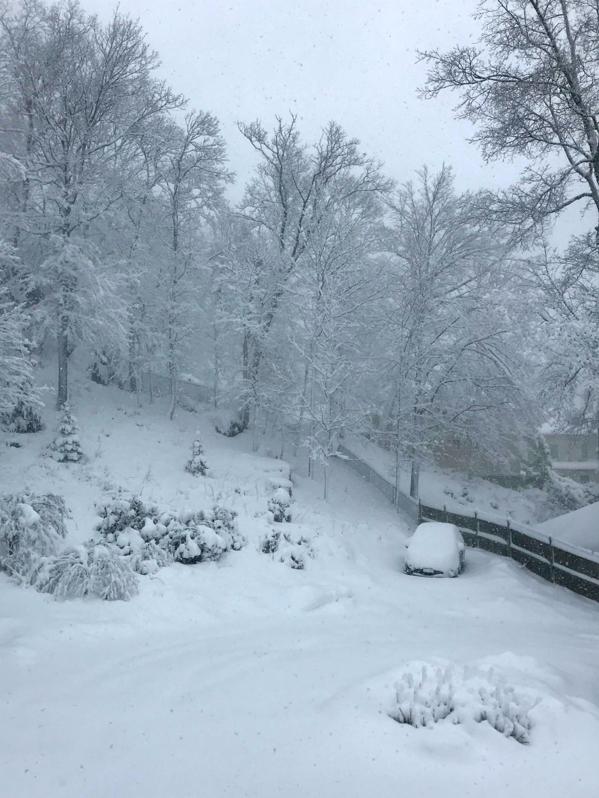 Snapshots of our winter Part 2 - 1