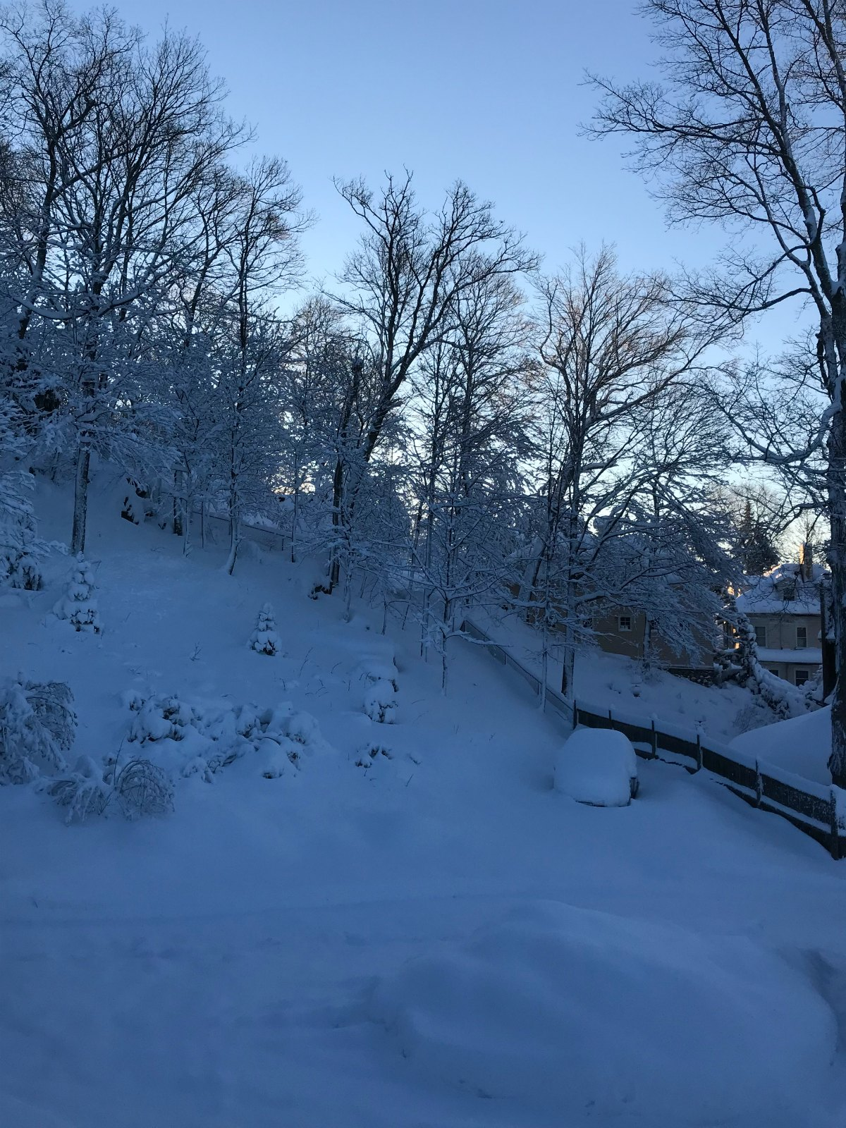 Snapshots of our winter Part 2 - 9